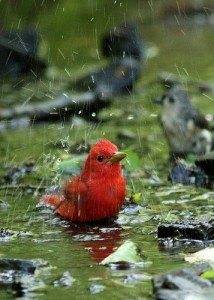 bird bath puddle